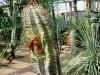 Тропический маршрут Ботанического сада имени В.Л. Комарова. Растения, пережившие войну, повязаны георгиевскими ленточками