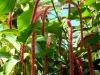 Тропический маршрут Ботанического сада имени В.Л. Комарова. Тропические растения