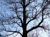 Усадьба Альбрехтов. Старое дерево