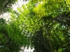 thumbs vodnyj marshrut 03 Ботанический сад имени В.Л. Комарова