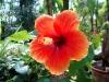 thumbs vodnyj marshrut 04 Ботанический сад имени В.Л. Комарова