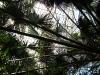 thumbs vodnyj marshrut 05 Ботанический сад имени В.Л. Комарова