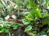 Водный маршрут Ботанического сада имени В.Л. Комарова. Большая пальмовая оранжерея