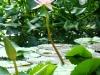 thumbs vodnyj marshrut 13 Ботанический сад имени В.Л. Комарова