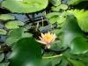 thumbs vodnyj marshrut 15 Ботанический сад имени В.Л. Комарова