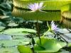 thumbs vodnyj marshrut 19 Ботанический сад имени В.Л. Комарова