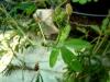 Водный маршрут Ботанического сада имени В.Л. Комарова. Мимоза стыдливая (сворачивает листья при касании)