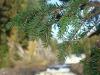Водопад Кивач с обзорной площадки
