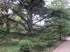 Воронцовский дворец. Алеи парка