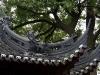 thumbs yuyuan garden 10 Сад Радости (Yuyuan Garden)