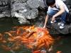 thumbs yuyuan garden 14 Сад Радости (Yuyuan Garden)
